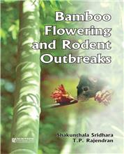 Bamboo Flowering and Rodent Outbreaks